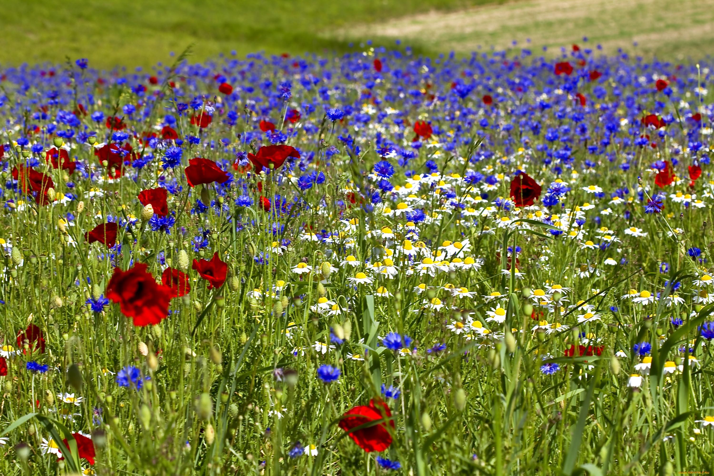 полевые цветы в июле стихи картинки названия для натяжных потолков